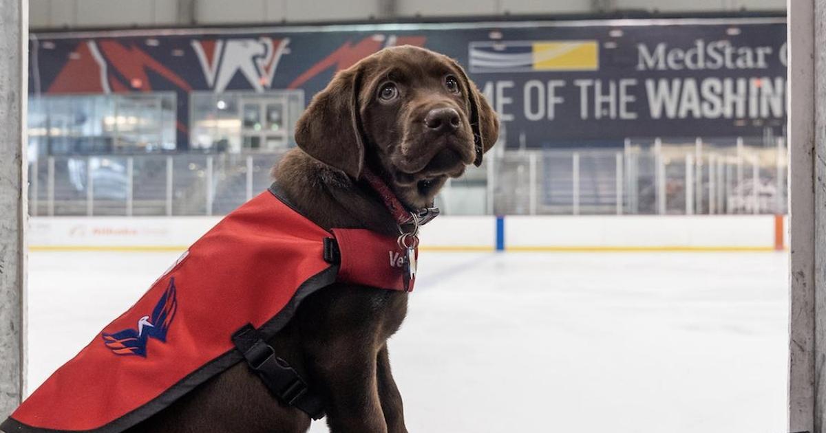 Washington Capitals New Puppy