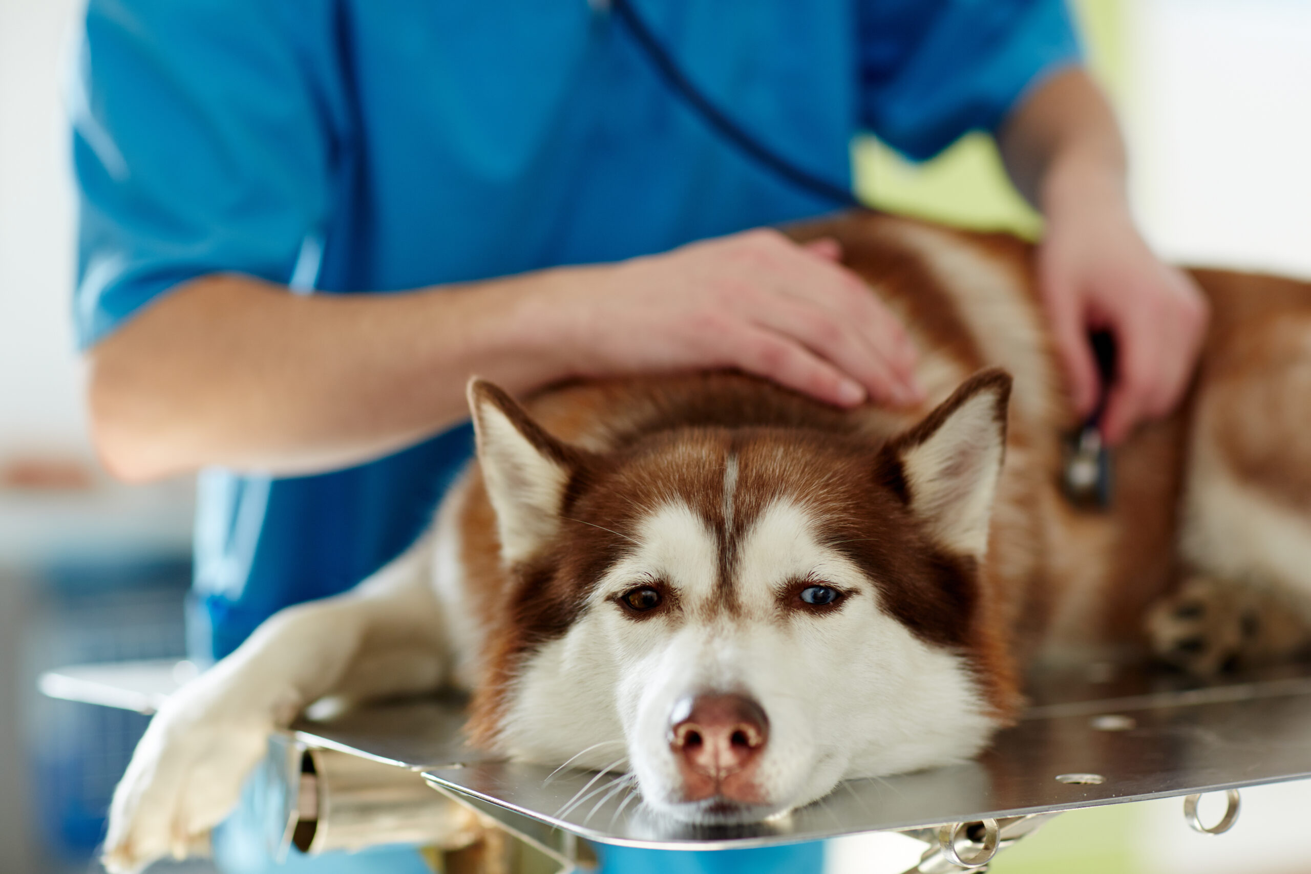 A Vet Explains What You Need To Know About Pet Insurance For Your Dog
